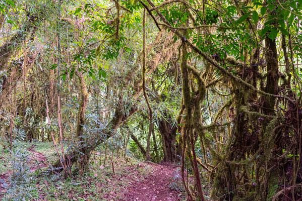 Ambiance de la forêt d'Harenna