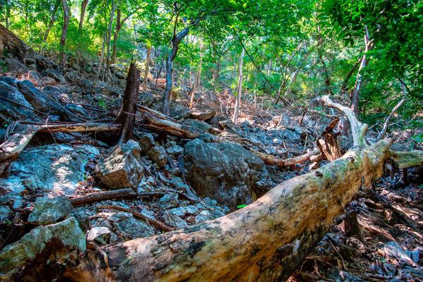 Milieu rocailleux et forestier typique de la zone sèche pacifique