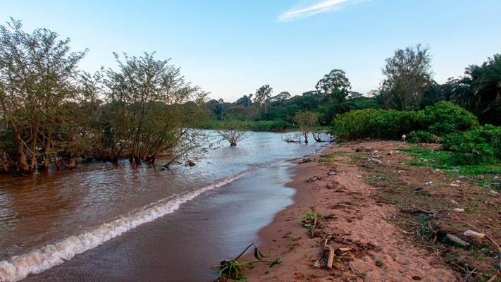 Fin... au jardin botanique de Entebbe