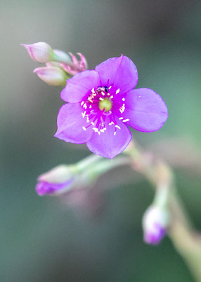Undefined flower