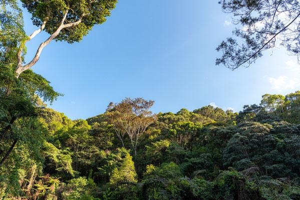 Forêt tropicale  de montagne.