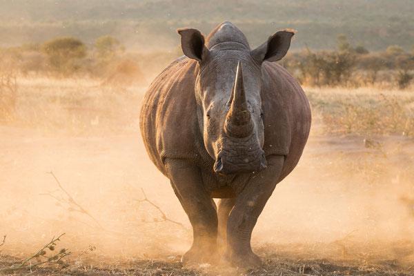 2016 Namibia - Waterberg, Wiedersehen hautnah mit alten Bekannten