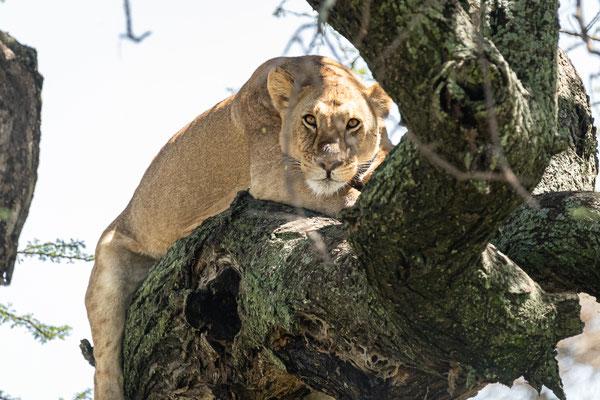 2019 Ein Kindheitstraum wird wahr - Serengeti Safari
