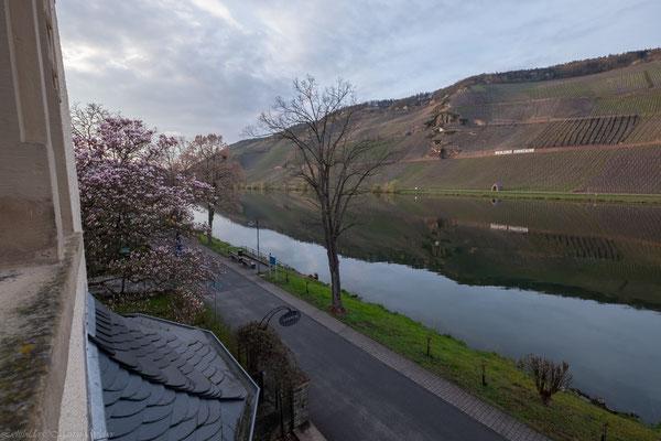 Blick aus dem Fenster im Frühling, die Magnolien stehen in voller Blüte, die Weinberge speichern Energie für die kommenden Rieslingtrauben.