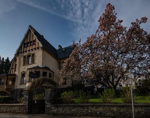 Villa Mathilda. Ferienwohnung in der Jugendstilvilla des Weinguts Kerpen, historisch, voller Charakter, eingebettet im traumhaften Garten, Hortensien, Magnolien, Blütenmeer und alter Baumbestand. Erholung pur.