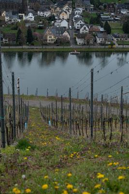 Ein Spaziergang in den gegenüberliegenden weltberühmten Steilhangweinberg Wehlener Sonnenuhr lädt nicht nur zum Fotografieren ein. Hier wachsen die Rieslingtrauben auch für Kerpens erlesene Weine.