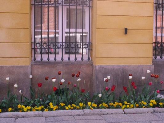 Tulpenrabatte, Warschau