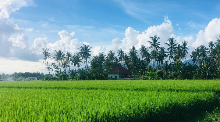 Pretty ricefields