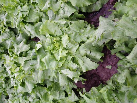 Salat mit einschlägen
