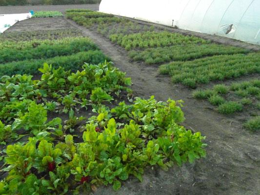 unser neuer Kräutergarten hat sich hübsch gemacht