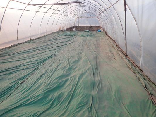 Unter die grüne Folie wird Heißdampf gegen Unkäuter geleitet