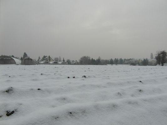 Schneeweißchen