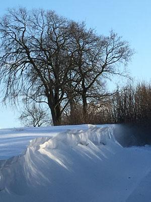 Schneewehe am Knick bei Schönwalde