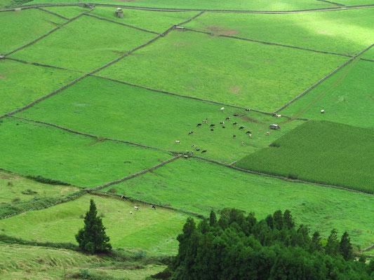 Das Inselinnere von Terceira ist die Heimat von 50 000 Rindern