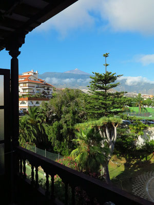 Blick von unserem Balkon 434 auf Drachenbaum und Araukarie bis zum wolkenfreien Pico del Teide
