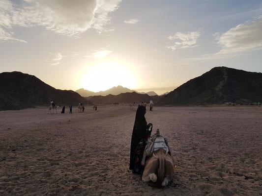 Bei den Beduinen in der Arabischen Wüste