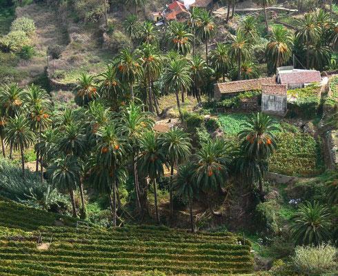Blick von der Straße südwestlich von Vallehermoso auf den Weiler Macayo, Palmenhaine und Weingärten