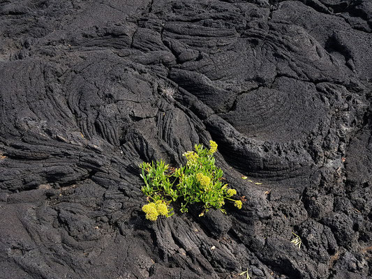 Lavaflächen an der Küste bei Cabrito an der Ponta Negra