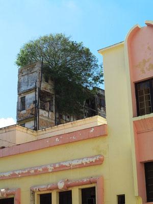 Bäume wachsen auf den Dächern.