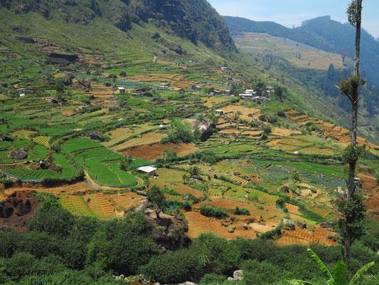 Felder mit Anbau von mitteleuropäischem Obst und Gemüse in den Bergen um Nuwara Eliya