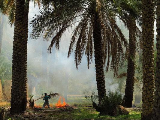 Verbrennen vertrockneter Palmzweige
