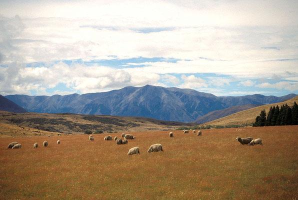 NZ Arthur's Pass