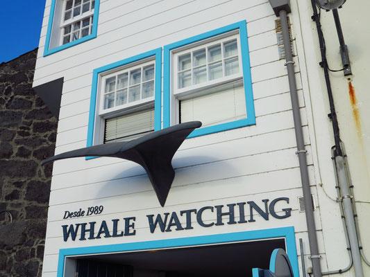 Lajes do Pico, Whale Watching mit Espaço Talassa