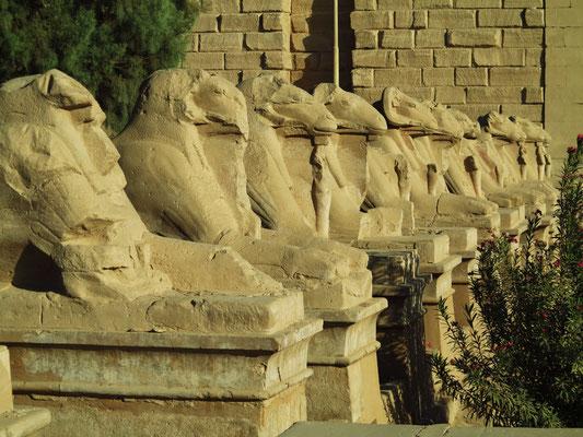 Widdersphinxallee vor dem Ersten Pylon des Karnaktempels, linke Seite