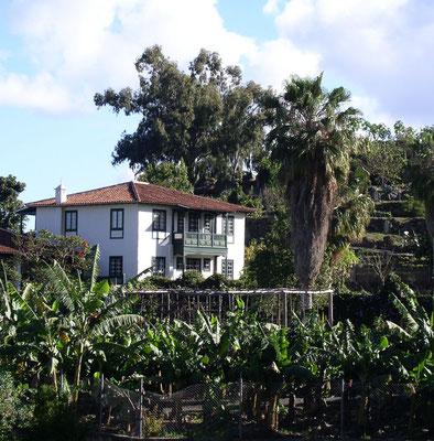 Realejo Bajo. Bio-Finca El Quinto mit Herrenhaus und Ferienhäusern