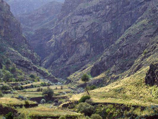 Valle de Agaete, wegen ihrer geschützten Lage und ihres Wasserreichtums die fruchtbarste Region der Insel mit üppiger subtropischer und tropischer Vegetation