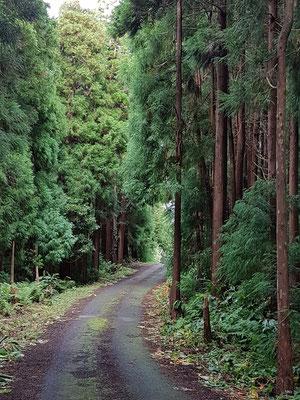 Fahrt durch den Wald der Sra. da Piedade steil bergab zur ER1