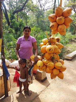Verkauf von Kokosnüssen am Straßenrand der Strecke Kandy-Dambulla, eine vitaminreiche Nahrung vor dem Aufstieg zum Felsen Pidurangala