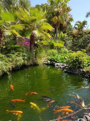 Kois und Goldfische im Teich