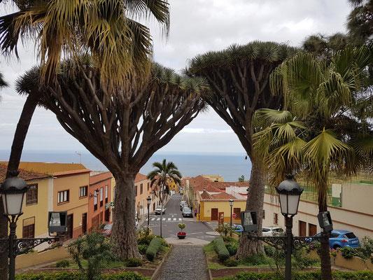 Realejo Bajo, Blick von der Kirche Parroquia Matriz de la Concepción nach Norden zum Meer