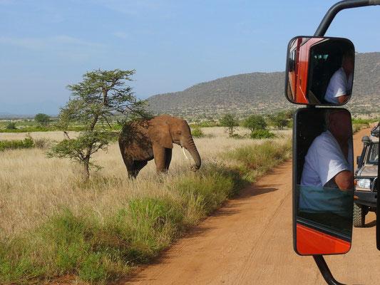 Erste Begegnung mit einem jungen Elefanten