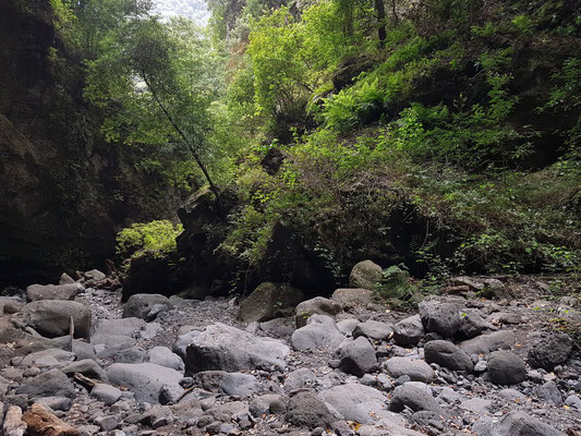 Bachbett auf dem Weg zum Wasserfall Los Tilos
