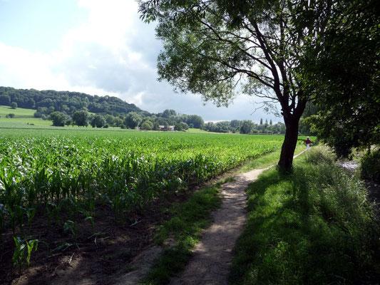 Aachener Soers am Wildbach und Blick zum Lousberg