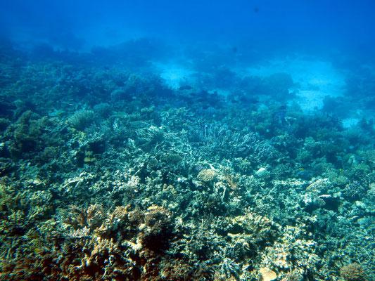 Blick aus dem Glasboden-Katamaran auf die Korallenbänke