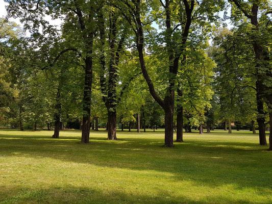 Park von Schloss Pillnitz