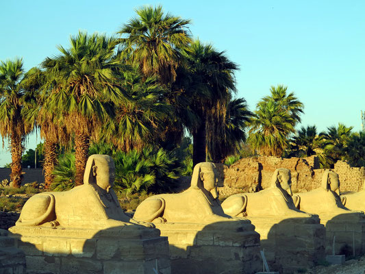 Teil der 2,5 km langen Sphingenallee vom Luxor-Tempel zum Karnak-Tempel