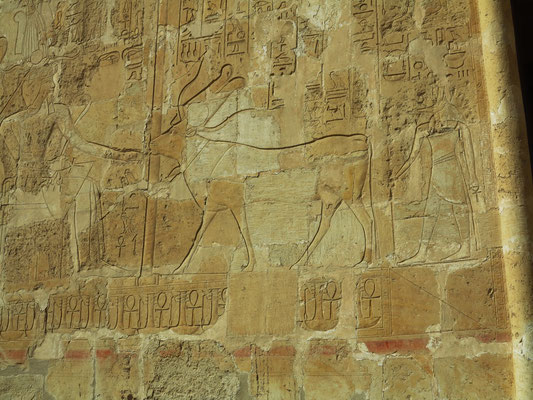 Hathor mit Kuhgehörn und Sonnenscheibe. Die Hathor-Kuh leckt der Hatschepsut die Hand. Hinter der Kuh steht Anubis. Die Königin sitzt unter einem Baldachin auf dem Thron.