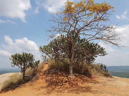 Spitze des Pidurangala-Monoliths