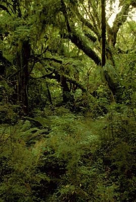 NZ Bei Purakaunui Falls