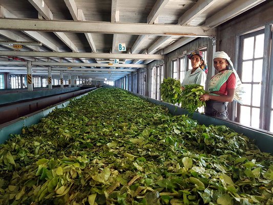 Blue Field Tea Factory, Mount Harrow, gegründet 1921