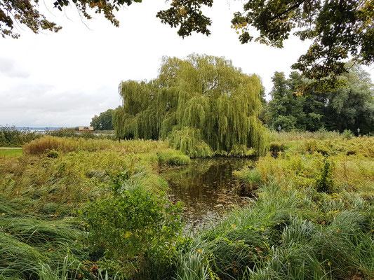 Naturbelassene Uferzonen im Schlossgarten