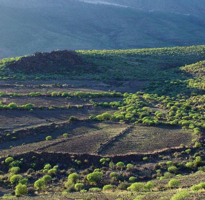 Landschaft mit Lesesteinmauern südlich von Santa Lucia