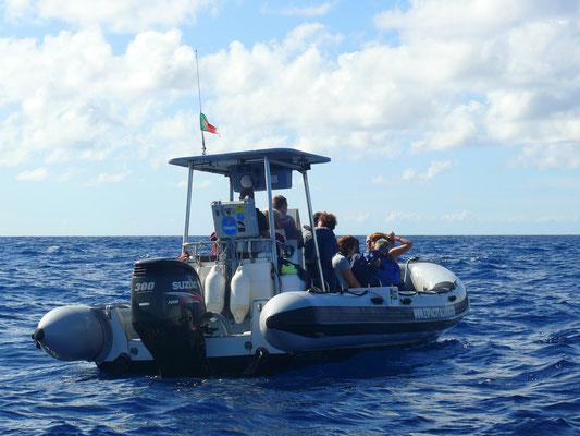 12-Personen-Hartboden-Schlauchboot für Walbeobachtung, eine Tortur für Leute mit Rückenproblemen