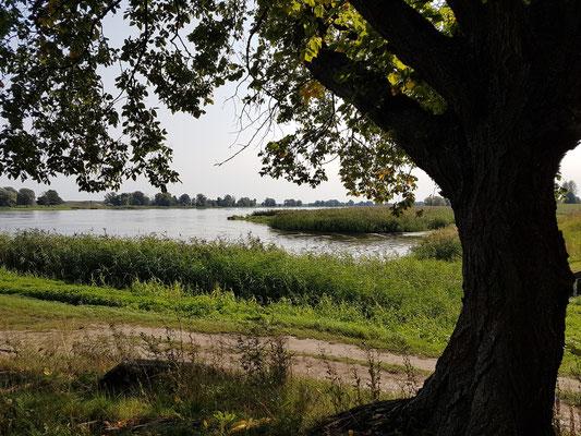Oderaue bei Groß Neuendorf