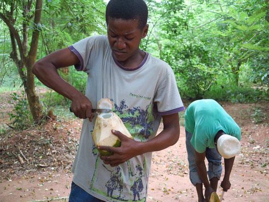 Aufschlagen der Kokosnuss zum Trinken der Kokosmilch
