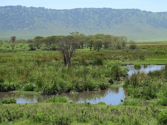 Feuchtgebiet im Ngorongoro-Krater